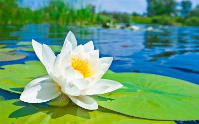 delicateflower